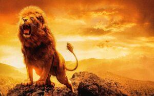 lion, male lion, female lion