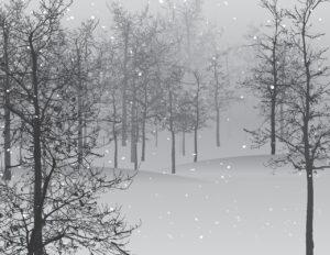 snow, scene, trees